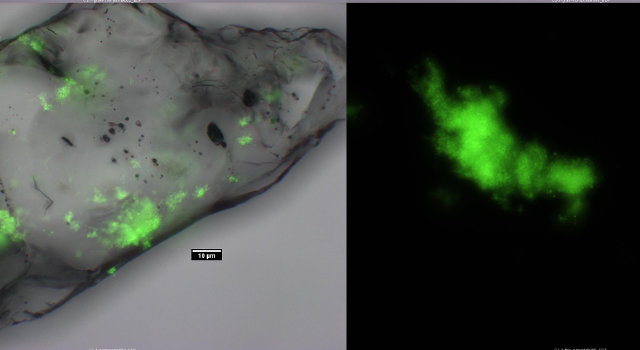 Attached biofilm and mobile floc from a laboratory model aquifer
