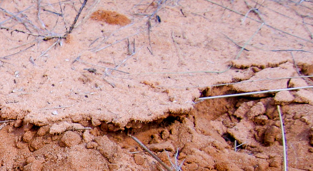 Biological soil crust disturbed during sampling